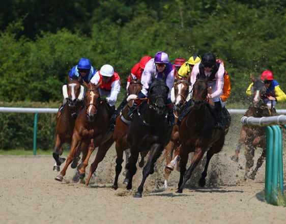 Discover horse racing betting tips for Doncaster, Lingfield and Wolverhampton. Start here by getting expert info and win consistently. You are close to something big with oddsdigger!