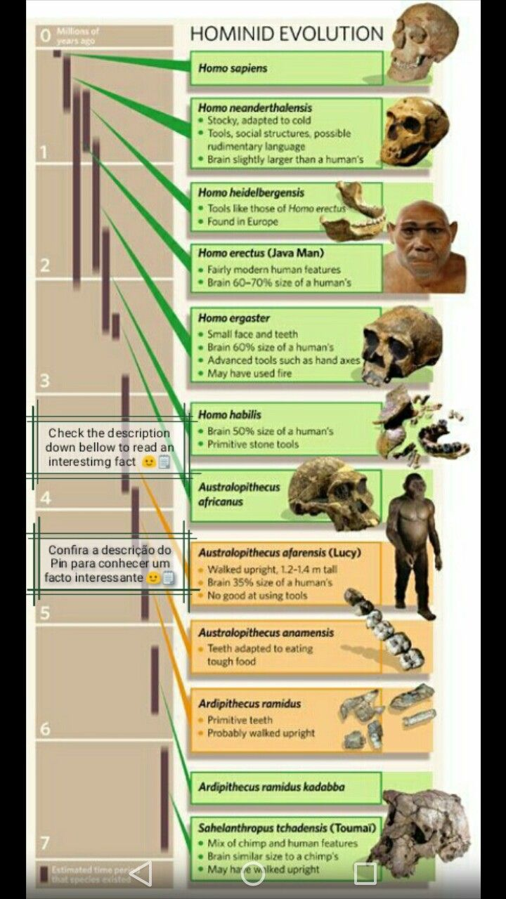 O Homem (Homo Habilis) começou a comer carne como necrófago - somos por natureza herbívoros - comendo os restos que grandes predadores como os leões deixavam para trás. Este facto comprova-se porque ao contrário dos outros carnívoros, os Humanos atuais (Homo sapiens sapiens) e os Homo Habilis carecem de garras e caninos desenvolvidos.