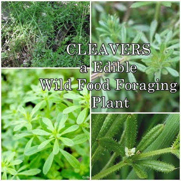 ultimate edible plant guide pdf