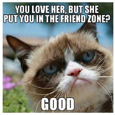 Grumpy Approved Meme Funny grumpy cat