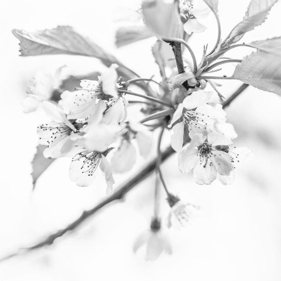 Black and White Macro Photography - Contemporary Fine Art Print - Oversized Art Print  - Minimalist Photography - Pinhole Style Photograph