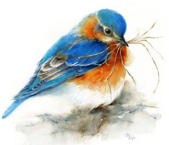 Les 1539 meilleures images du tableau art peinture oiseaux for Oiseau bleu et orange