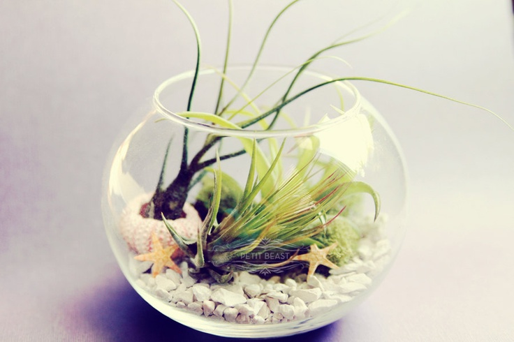 Sea inspired fishbowl terrarium air plants in glass