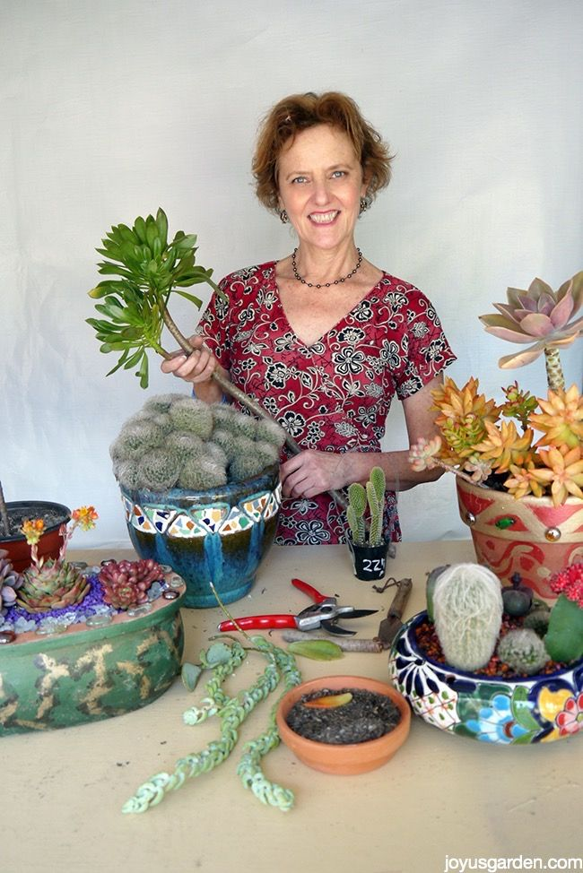 There are 2 very easy ways to propagate succulents. This post, video included, will show you how.