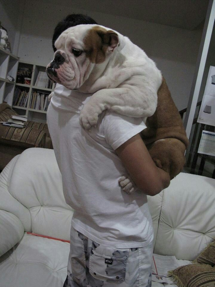 How I want to hold my bulldog! ❤