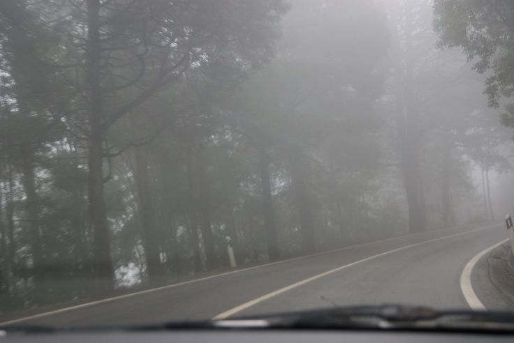 foggy's forest