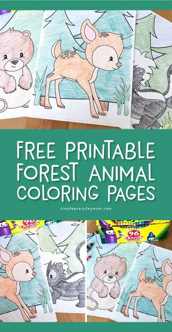 Woodland Animals Coloring Pages Free Printable Woodland Animal Coloring Pages For Kids Forest Animals Preschool Animals For Kids Forest Animals