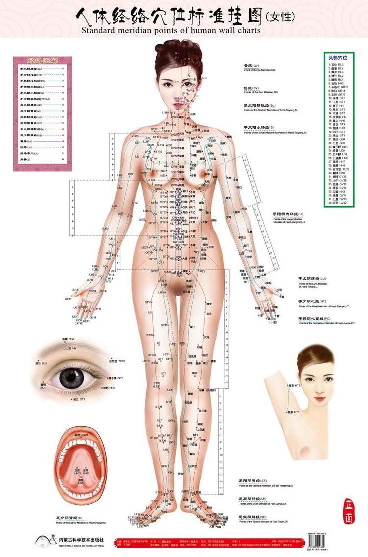 Padrão de pontos meridianos de parede gráfico humano ponto de acupuntura massagem feminino mapa flipchart HD 3 chinês e Inglês(China (Mainland))