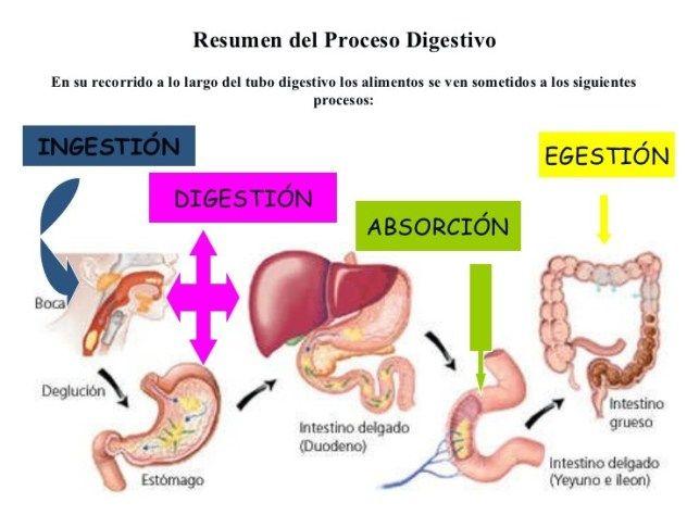La mejor explicación de Metabolismo basale He escuchado