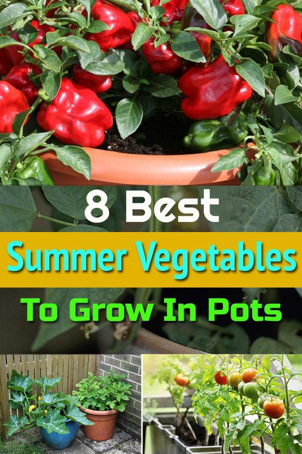 8 Best Summer Vegetables To Grow In Pots Growing Vegetables Summer Vegetables Garden Summer Vegetable