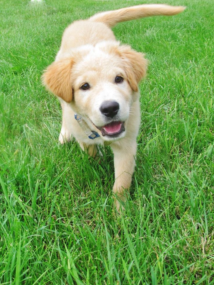"""Nolan, adopted from Capital Area Humane Society – Lansing, MI: """"Nolan is always smiling as he explores a whole new world!"""""""