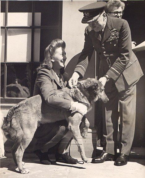 Bing, the dog of war who parachuted into France to become a D-Day hero