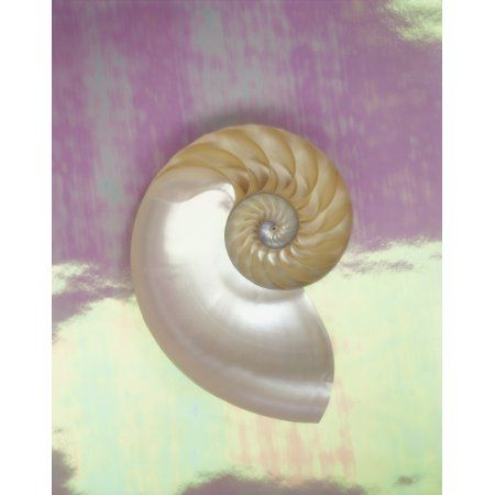 Pearl Nautilus Shell Show Chambers On Pearly Dewy Background Canvas Art - Kate Turning and Tom Gibson Design Pics (13 x 17)