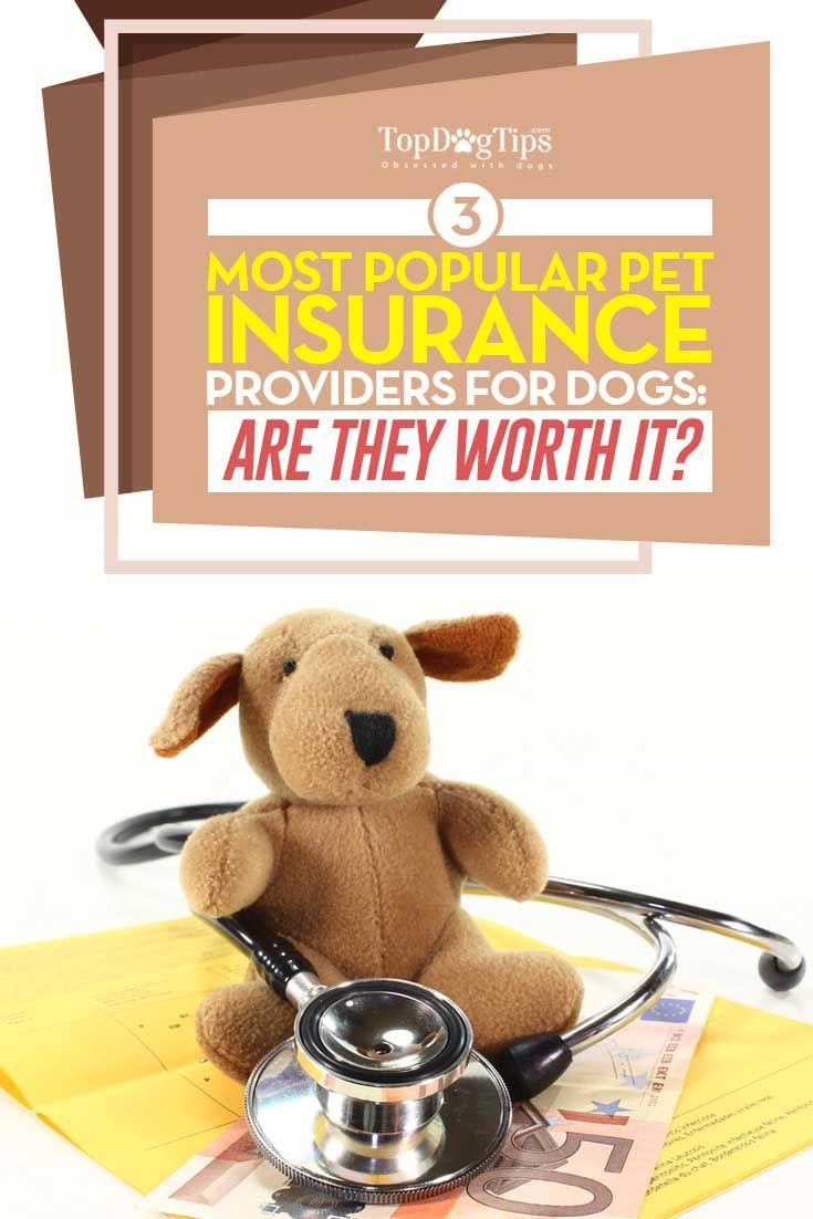 3 Providers of Best Pet Insurance for Dogs & Are They Worth It? We love our dogs like family members. For many pet owners, dogs are like furry children. Caring for these animals includes not only supplying food and toys, but also proper veterinary care which often costs a lot of money. Below, I list three best pet insurance for dogs plans that will cut your vet visit costs by a large margin. #dogs #insurance #pets #health #best #tips #lists #review #critique #top