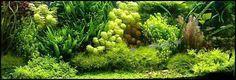 Carpet aquarium plants http://www.ebay.co.uk/itm/Carpeting-aquarium-plants-tropical-tank-fish-moss-nano-aquascaping-/371773808035?var=640748045272&hash=item568f721da3:m:m17yKQvt8kPGB6WJ917e0SQ