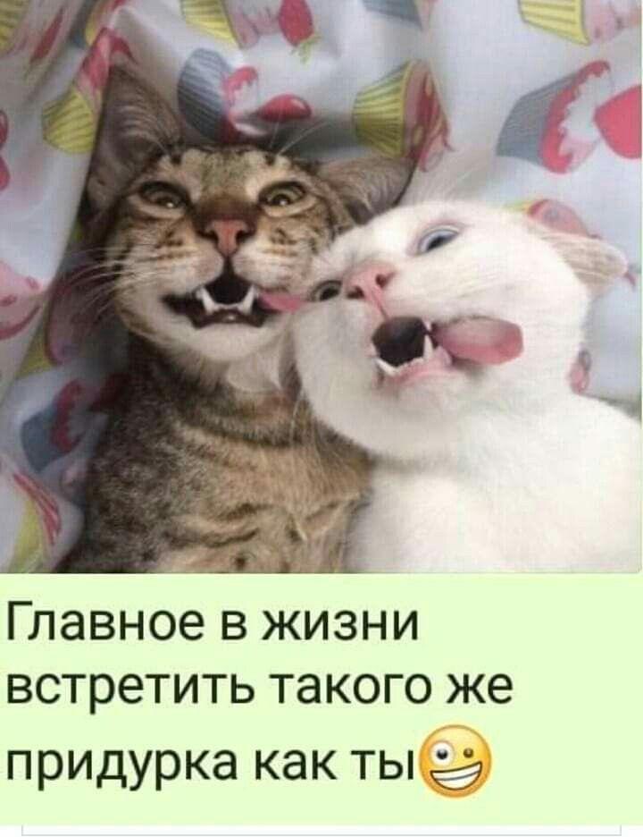 Приколы с животными (With images) | Смішні фото, Смішні ...