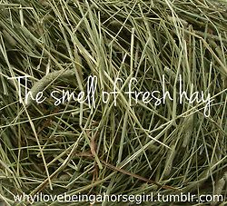 :-)  One of the many components in our favorite perfume: Eau de Cheval.