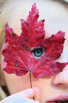 Autumn leaf photo inspiration