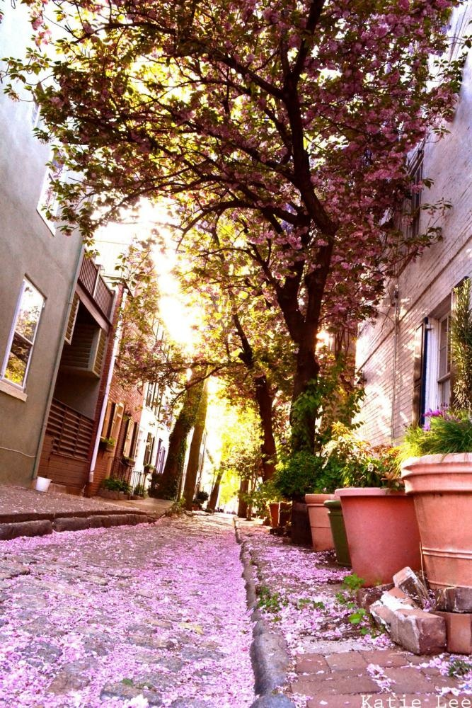Sunshine & Cherry Blossom Path.