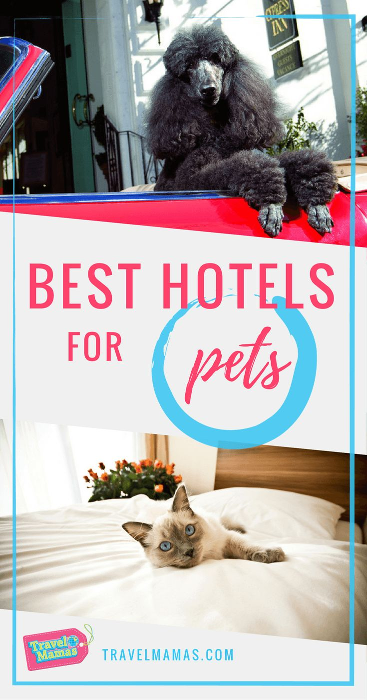 Best Hotels for Pets for All Sorts of Vacation Styles #pets #petcation #hotels
