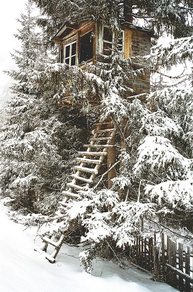 Treehouse in the snow
