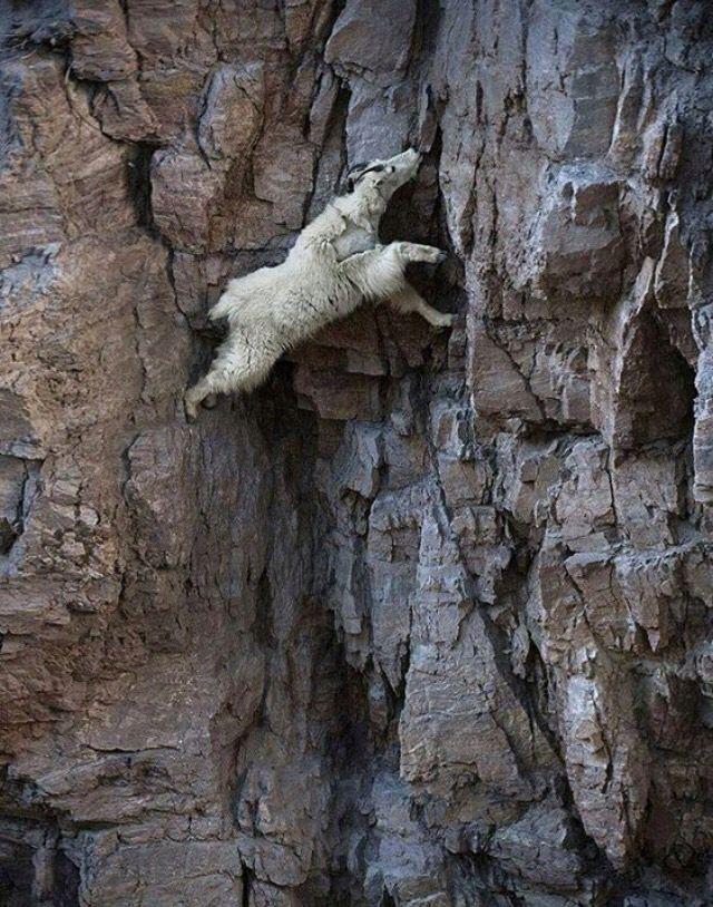 Climbing expert