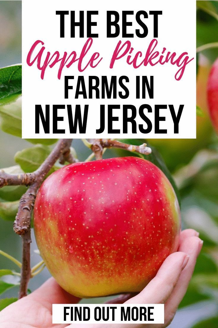 Where To Take Your Family Apple Picking In New Jersey Apple Picking Pick Your Own Apples Apple Picking Farm