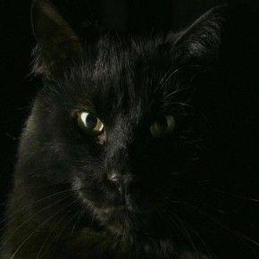 Alcuni dicono che i gatti sono subdoli, malvagi e crudeli. E' vero, e hanno tutta una serie di altre qualità. (Miss Dick)