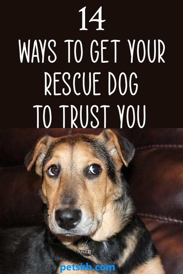 How To Get A Shelter Dog To Trust You