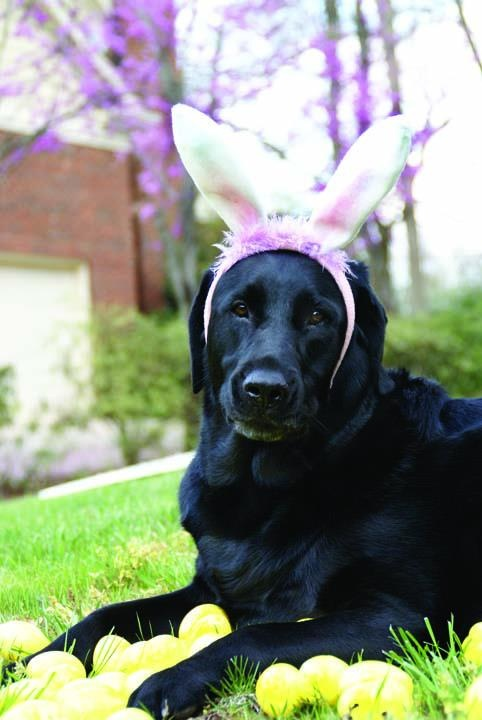 """Jordan enjoying the spring weather and wishing everyone a Happy Easter!"": Photos, Easter Animal, Easter Pup, Jordans Enjoying, Happy Easter, Easter Ideas"