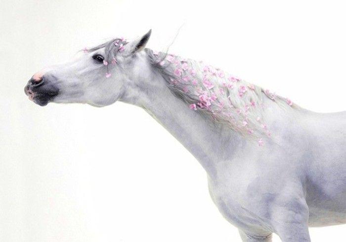 White Horse Flowers Braided Mane