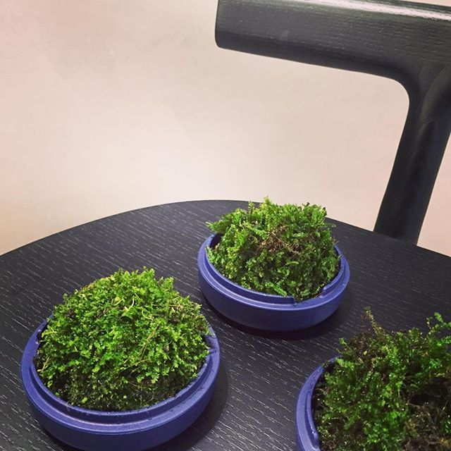 We are in love with our mossariums @district_au A gift that will keep on giving well into 2016 💚🍃🌳🌿☘💚 #mydistrictsanctuary #botanica #district #mattiazzi #geyerperth