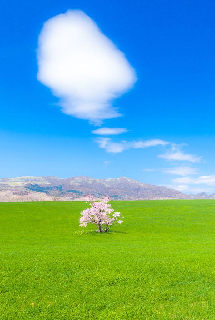 CANON(キヤノン)のカメラ Canon EOS 5D Mark IIで撮影した風景(絵本のさくら)の写真(画像)