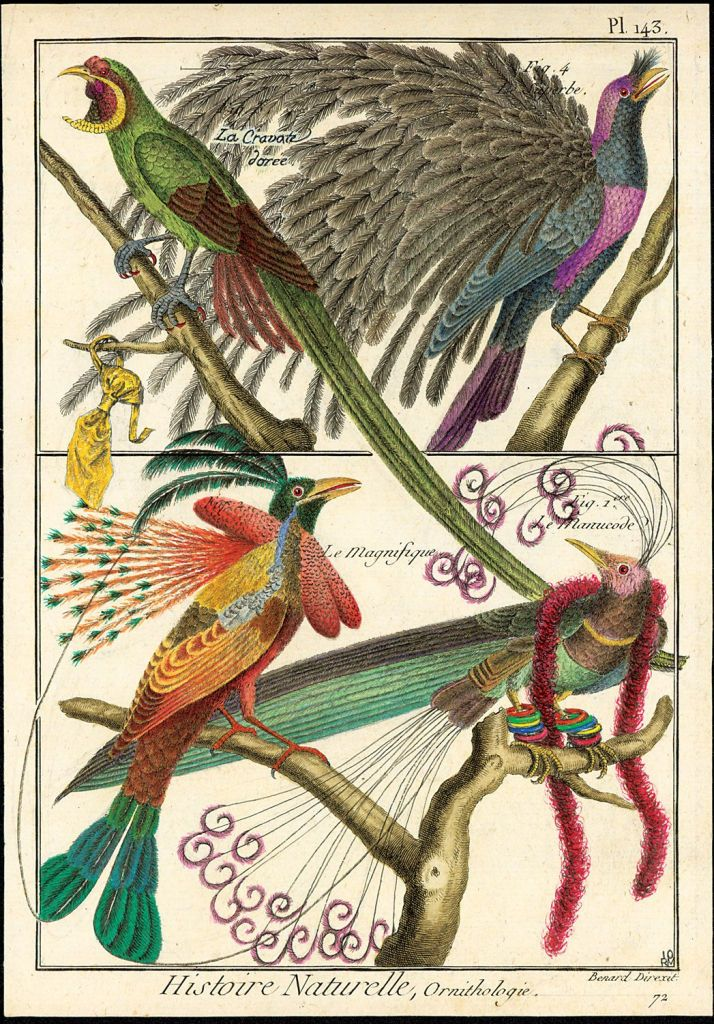 5754 best naturally images on Pinterest Bird prints Birds and