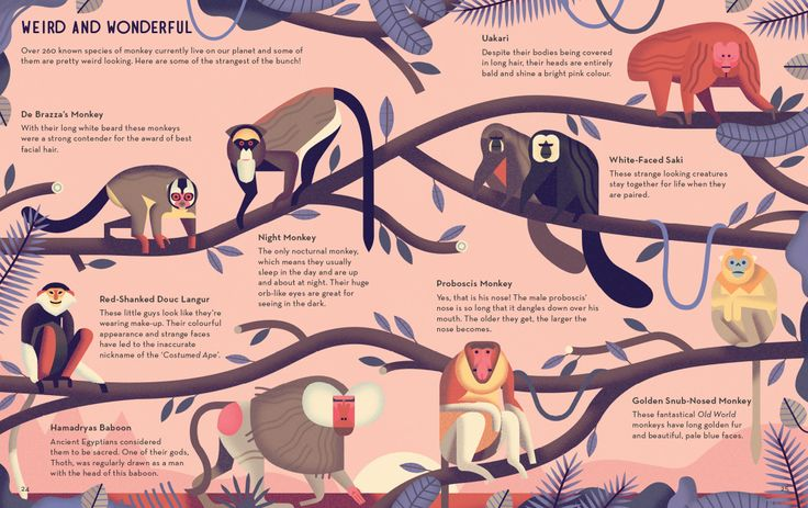 Mad about Monkeys - Owen Davey Illustration  Ide: lage sin egen serie av noe man liker.