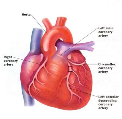 Guide for Heart Disease Causes and Prevention