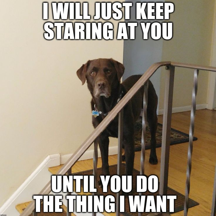 I will just keep staring at you until you do the thing I want