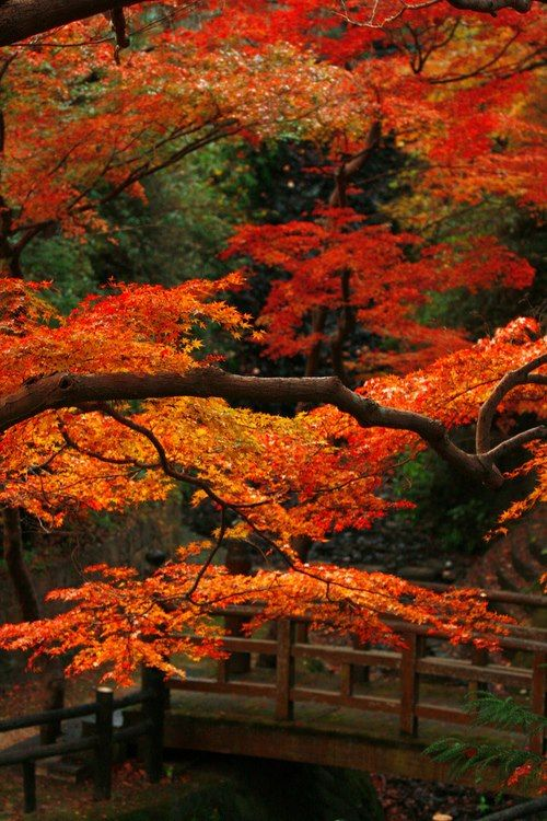 Bridge in beautiful Autumn scenery