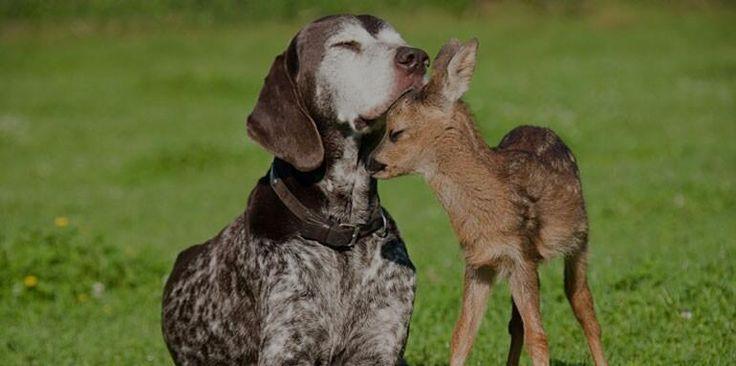 Cane e cerbiatto tenerissimi
