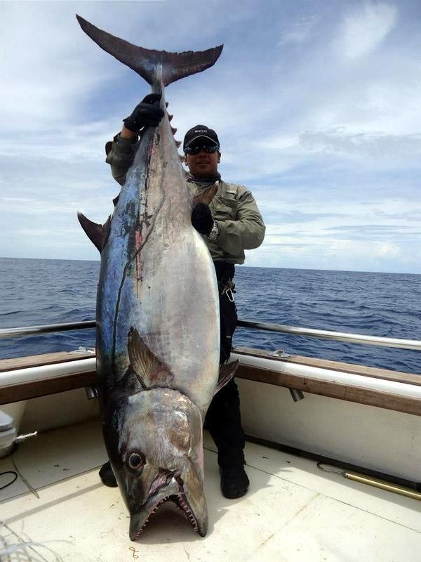 Dogtooth tuna catch of the day pinterest big teeth for Tuna fishing videos