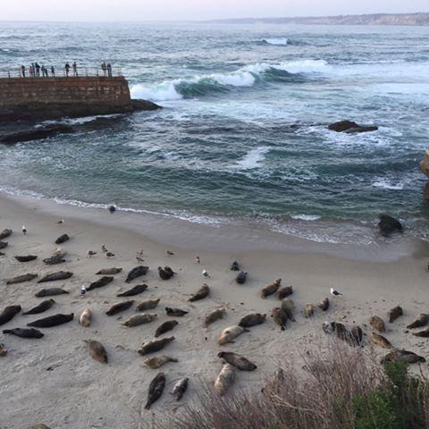 Where sea lions are free ❤🌊🌊 #lajollabeach #sandiego #california #usawestcoast #usa #traveler #wanderlust #sandiego #sandiegoconnection #sdlocals #sandiegolocals - posted by Yaritza Serrano-Gómez https://www.instagram.com/yaritzaserrano11. See more post on San Diego at http://sdconnection.com