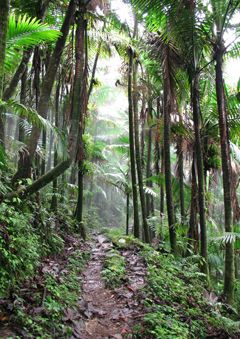 Puerto Rico hiking. I'm so in the mood for a vacation!!!!! :( maybe next year!!!