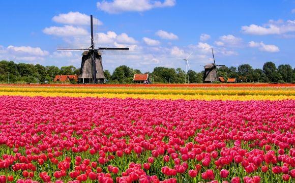 10 photos de voyage pour voir la vie en rose - Champs de tulipes, Hollande