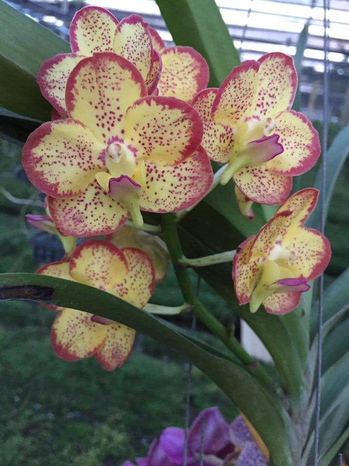 #Orchids - http://dennisharper.lnf.com/