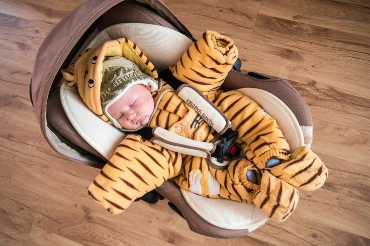 Mały tygrys słodko śpi :) więcej zdjęć w galerii: http://www.snaphub.pl/galerie/panasonic-lumix-g6-moje-najlepsze-zdjecia-zimowe. #Panasonic #Lumix G6.
