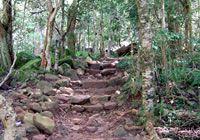 Newlands Forest Hike ending at Rhodes Avenue (hiking)