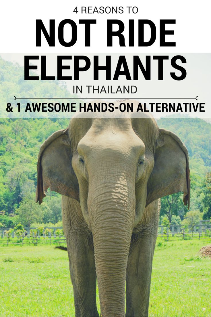 4 Reasons NOT to Ride Elephants in Thailand (& 1 Awesome Hands-On Alternative)
