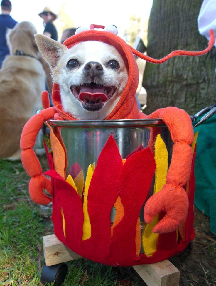 Cat Lobster Pot Costume