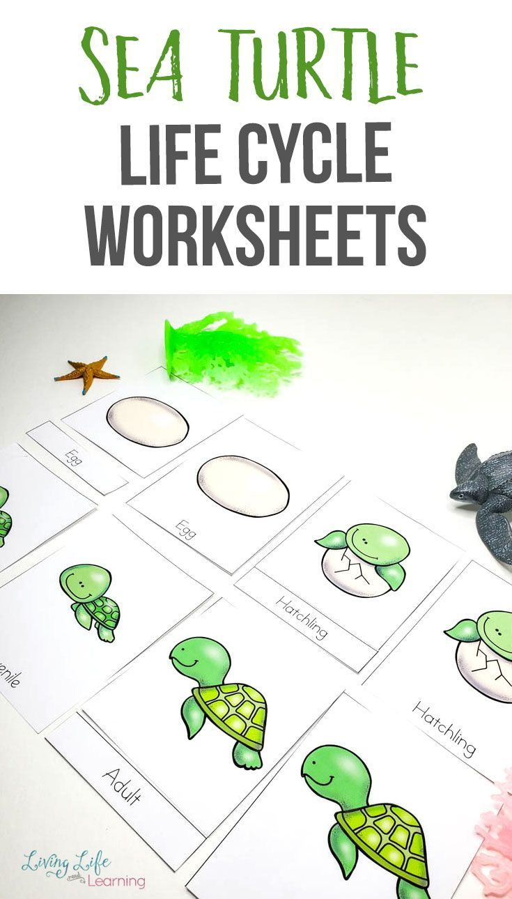 Sea Turtle Life Cycle Worksheets For Kids Turtle Life Cycle Sea Turtle Life Cycle Life Cycles [ 1290 x 735 Pixel ]