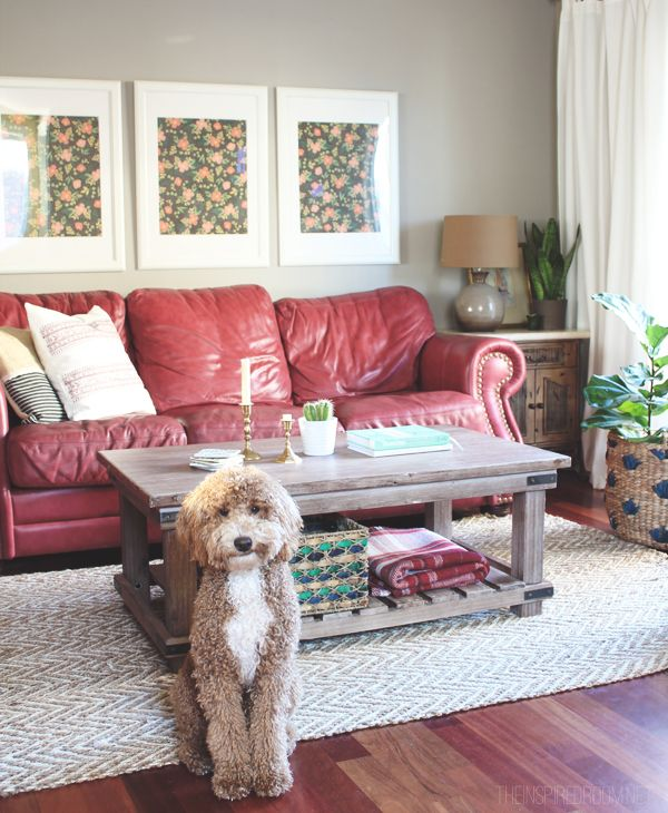 Living Room Decorating With Red Couches   Bella The Labradoodle